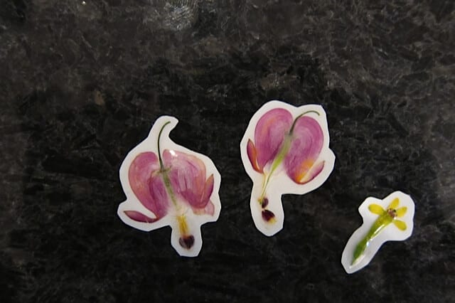 Make Stickers Out of Real Flowers! | Real Food RN