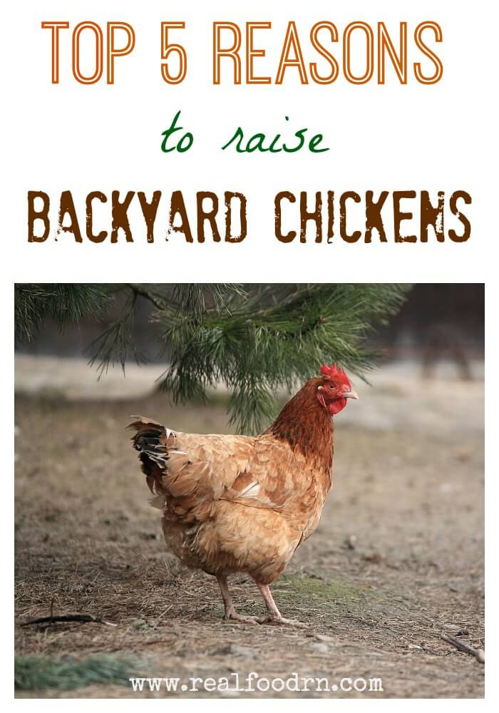 Top 5 Reasons to Raise Backyard Chickens | Real Food RN