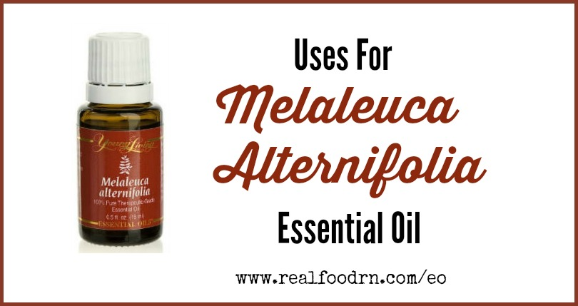 Uses for Melaleuca Alternifolia Essential Oil