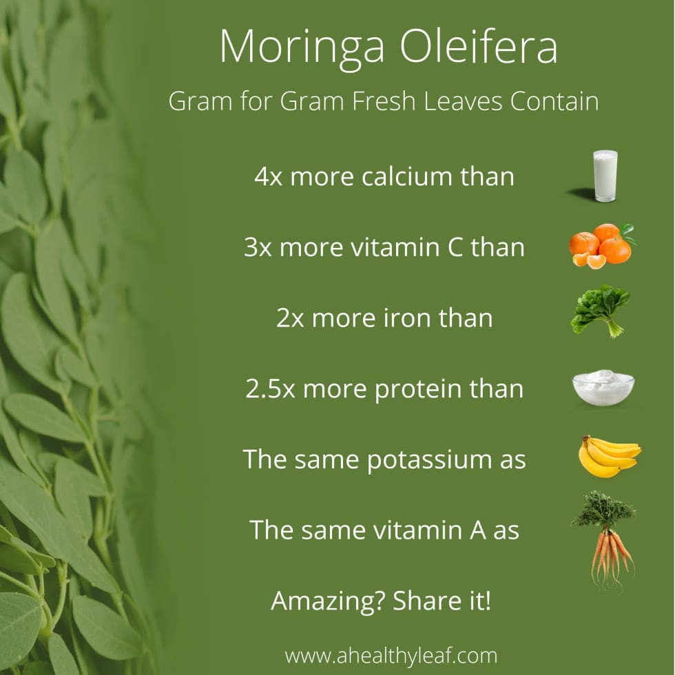 What is Moringa Oleifera | Real Food RN