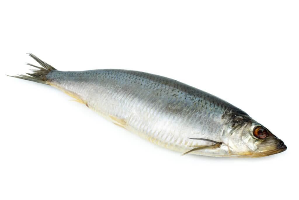 10 Popular Foods Rich In Omega-3 Fatty Acids   Real Food RN