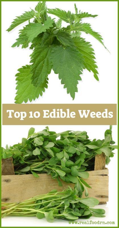 Top 10 Edible Weeds   Real Food RN