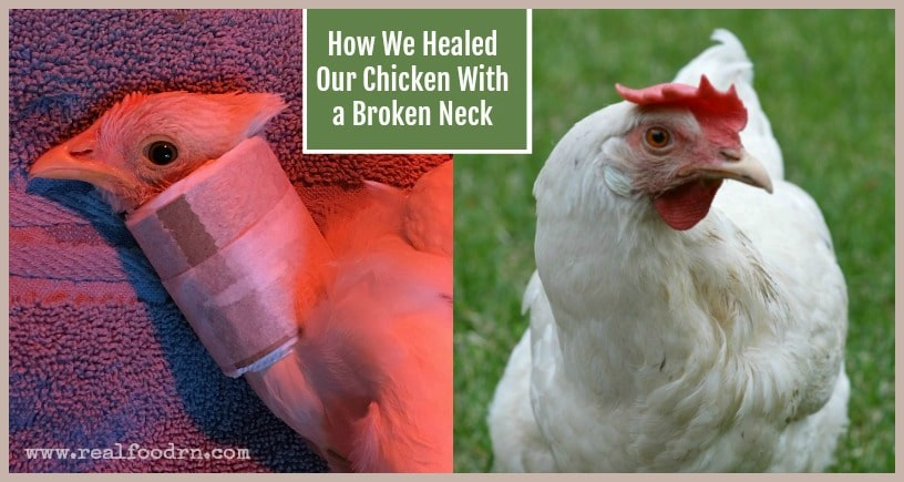 How We Lovingly Healed Our Chicken With a Broken Neck | Real Food RN