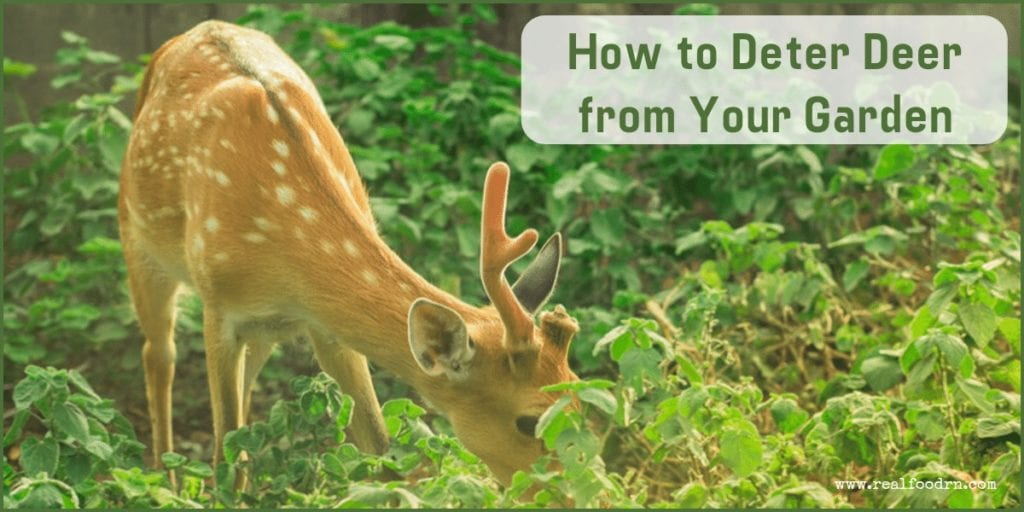 How to Deter Deer from Your Garden | Real Food RN