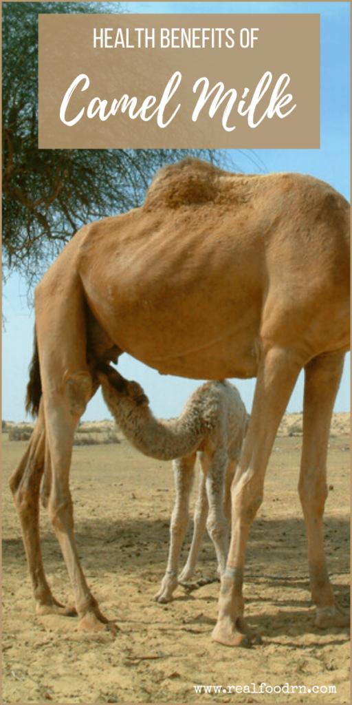 Health Benefits of Camel Milk   Real Food RN